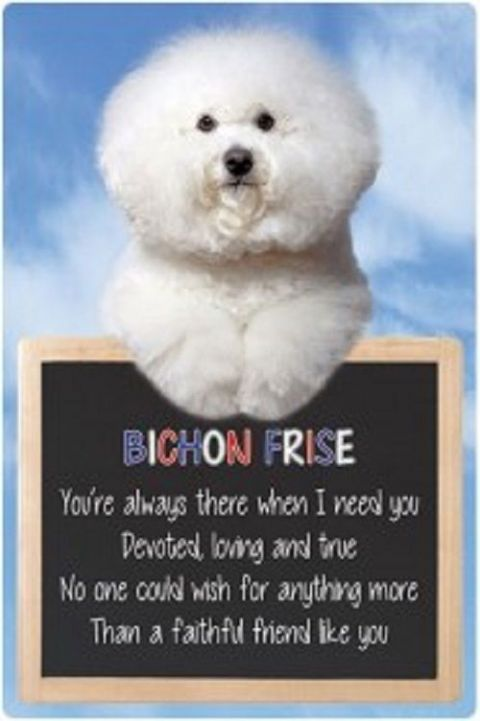 Bichon Frise  3D home hang up sign